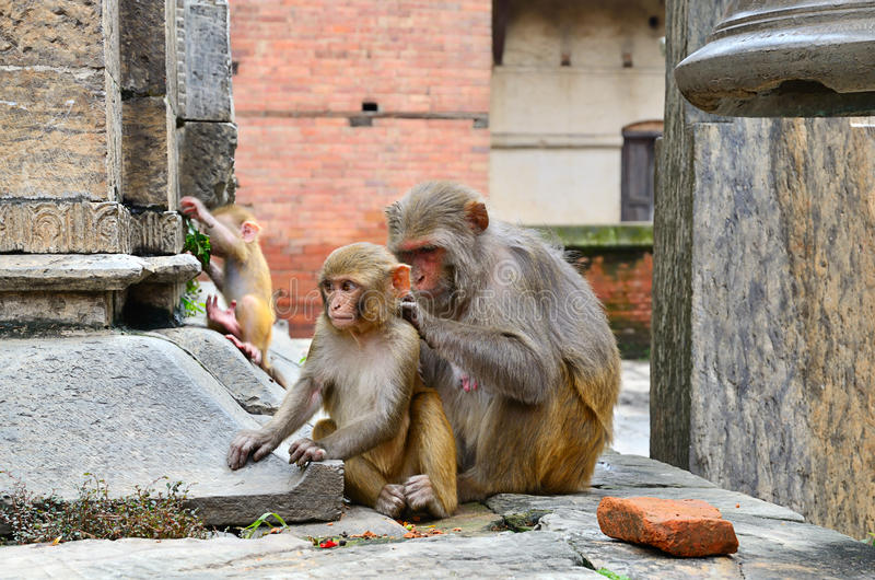 Download Group of monkeys stock photo. Image of nature, mammal - 34188704