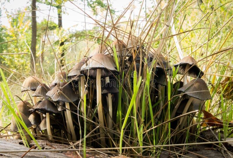 Group of mushrooms royalty free stock photos