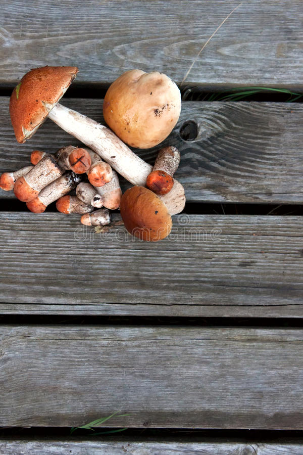 Group of mushrooms lying on a wooden background stock photo