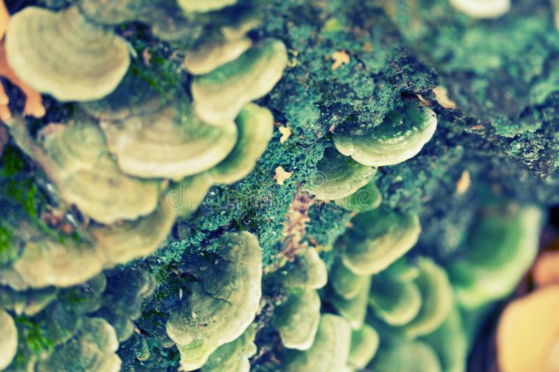 Group of mushrooms in moss royalty free stock image