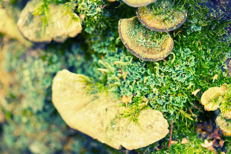 Group of mushrooms in moss stock photography