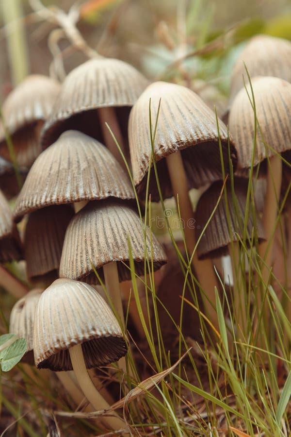 Group of mushrooms toadstools stock photos