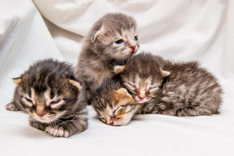 Group of newborn kittens. Blind little cute kittens are waiting royalty free stock photos