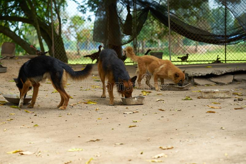 Group oef dogs eat food by cup feed. In farm with cage stock photos