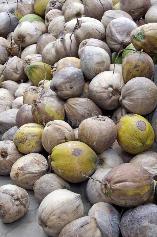 Download Group Of Old Coconuts Royalty Free Stock Images - Image: 25571749