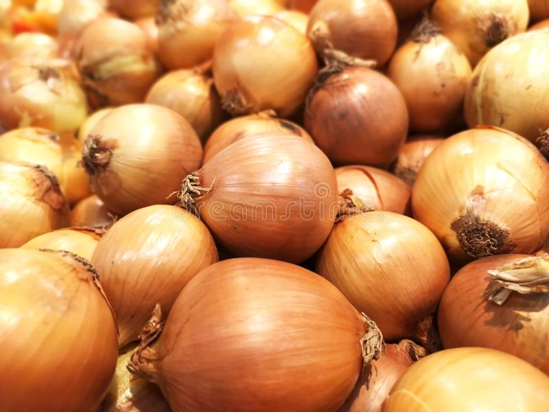 Group of onion for background royalty free stock photos