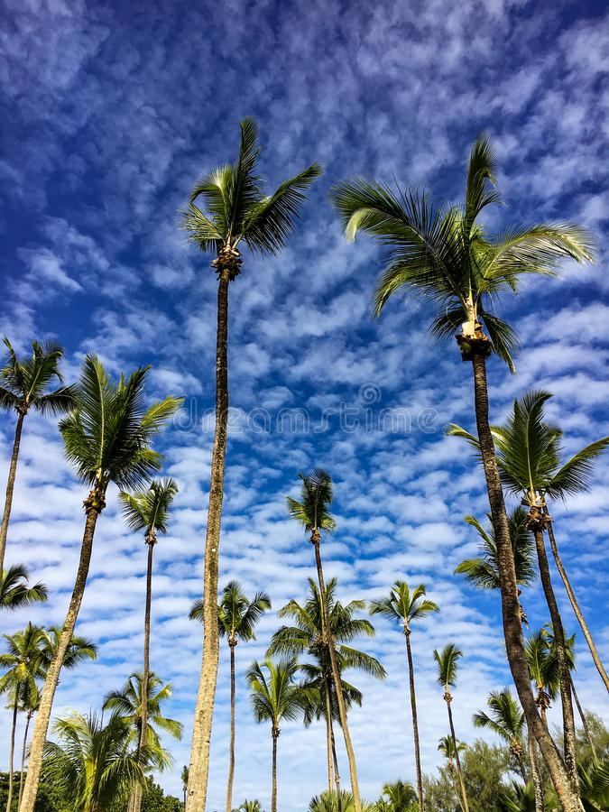Group of palm trees on a blue cloudy sky background royalty free stock photos