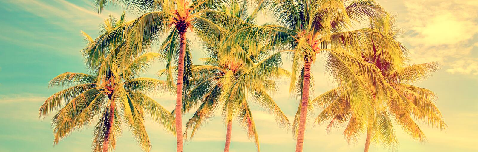 Group of palm trees, vintage style summer panorama, travel concept royalty free stock photos