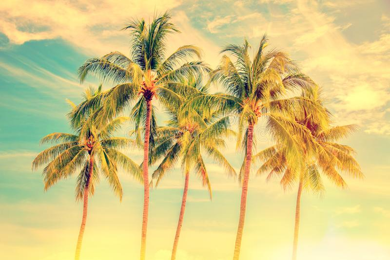 Group of palm trees, vintage style, summer travel concept. Group of palm trees, vintage style, summer and travel concept royalty free stock photo