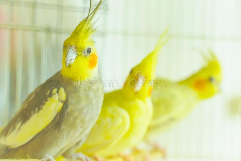 Group of parrot corrals royalty free stock images