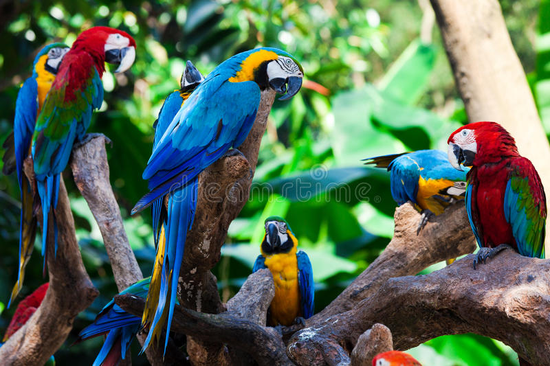 Group parrots. Group of beautiful parrots in a tree