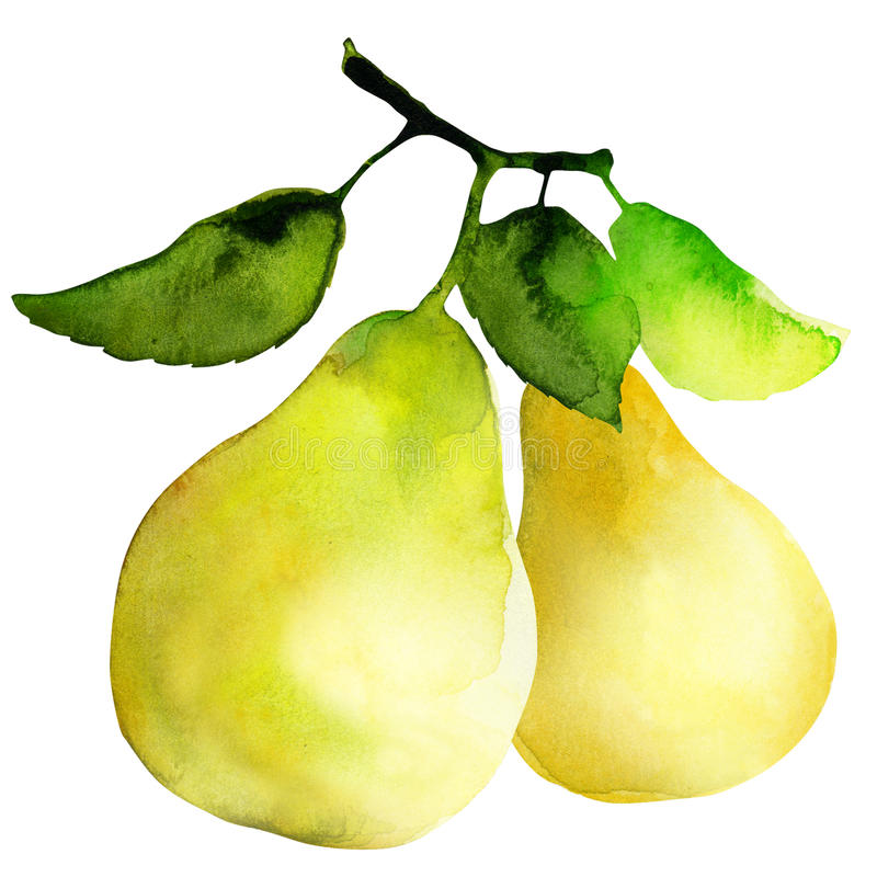 Group Of Pears Royalty Free Stock Image