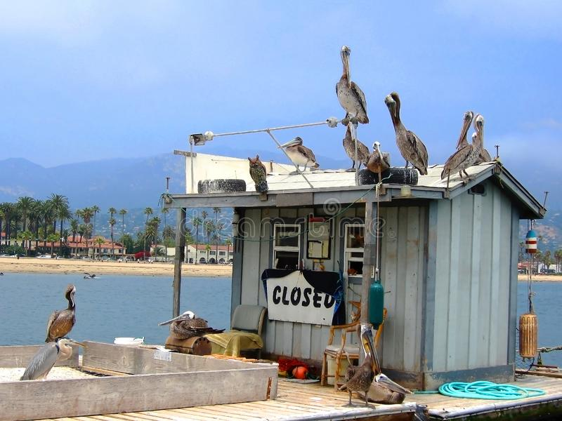 Group of Pelicans and Sea Birds on Closed Fish Bait Shop at Sea. Group of Pelicans and Sea Birds Sit all over a Bait Stand on a Pier with the California royalty free stock photos