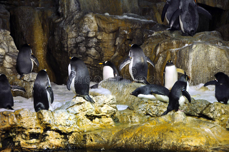 Download Group of penguins stock photo. Image of cold, group, arctic - 10669272