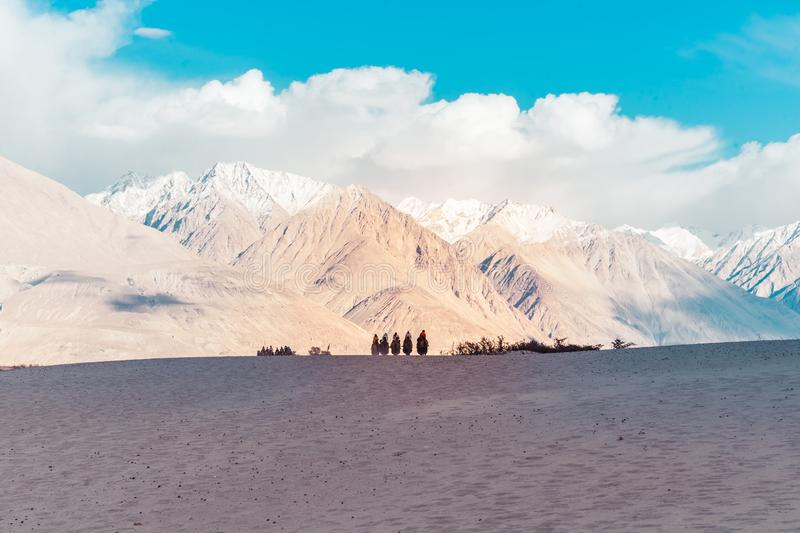 A group of people enjoy riding a camel walking on a sand dune in Hunder, Hunder is a village in the Leh district of Jammu and stock photo