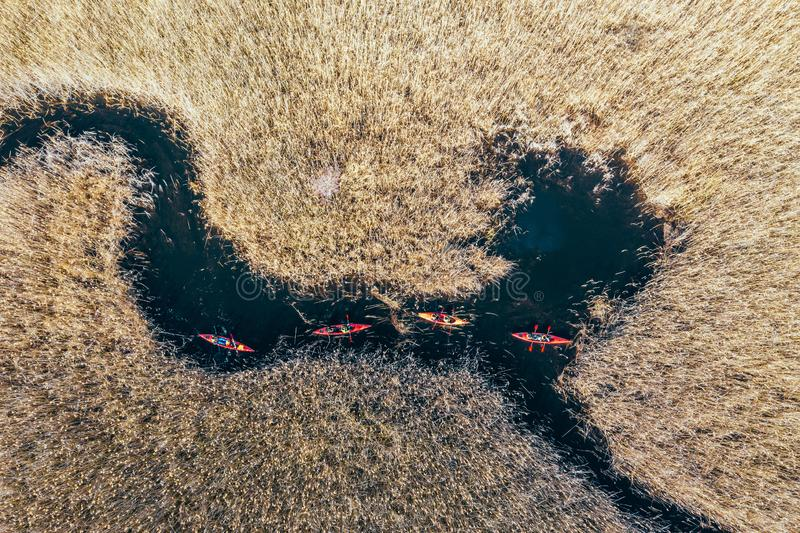 Group of people in kayaks among reeds on the autumn river. royalty free stock photo