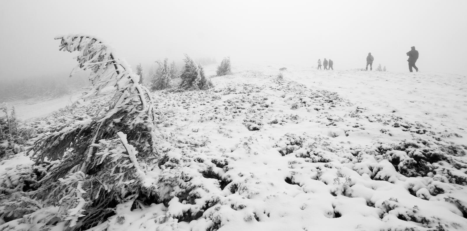 Group of people trekking in foggy winter landscape royalty free stock photos