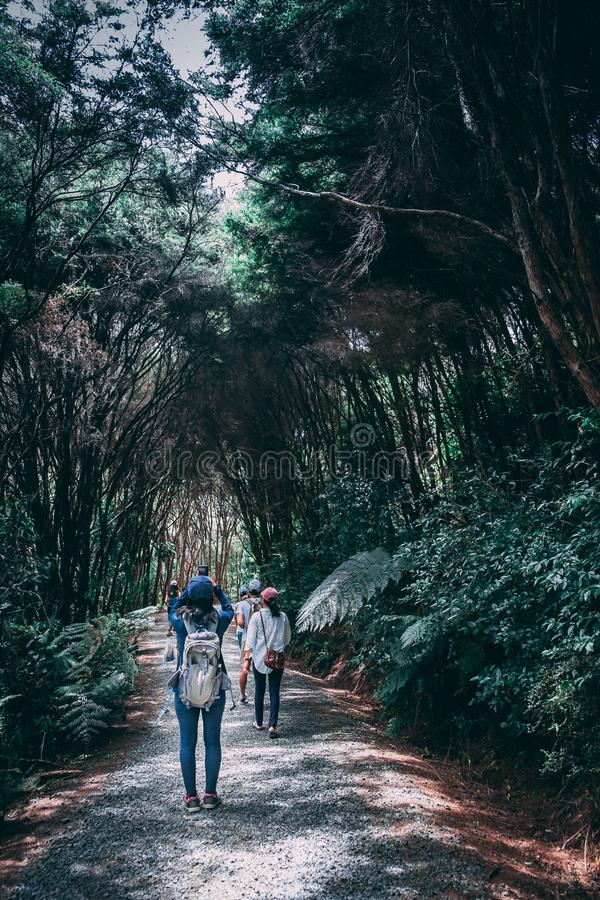 Group of People Walking in Forest stock photos