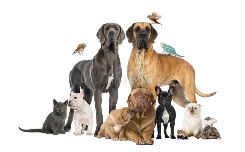 Group of pets - Dog, cat, bird, reptile, rabbit stock photos