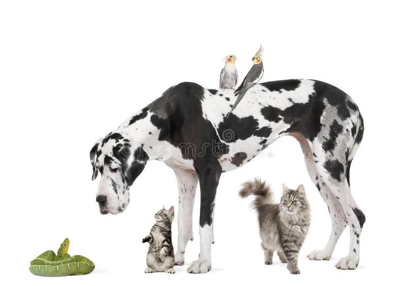 Group of pets in front of white background. Studio shot stock photo