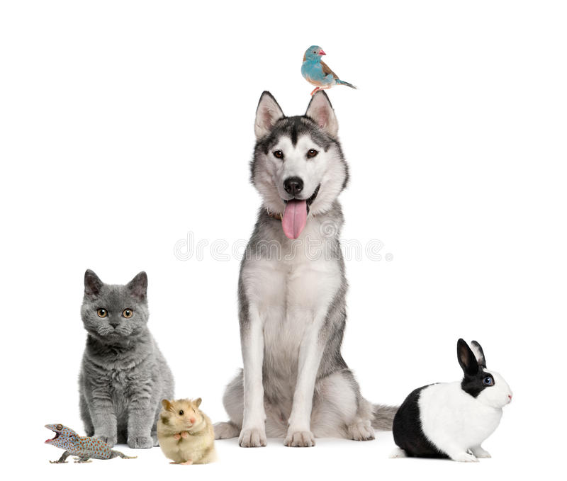 Group of pets in front of white background royalty free stock photo