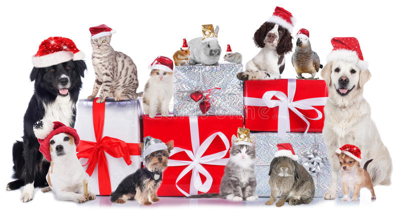 Group of pets in a row with santa hats. And xmas gift boxes