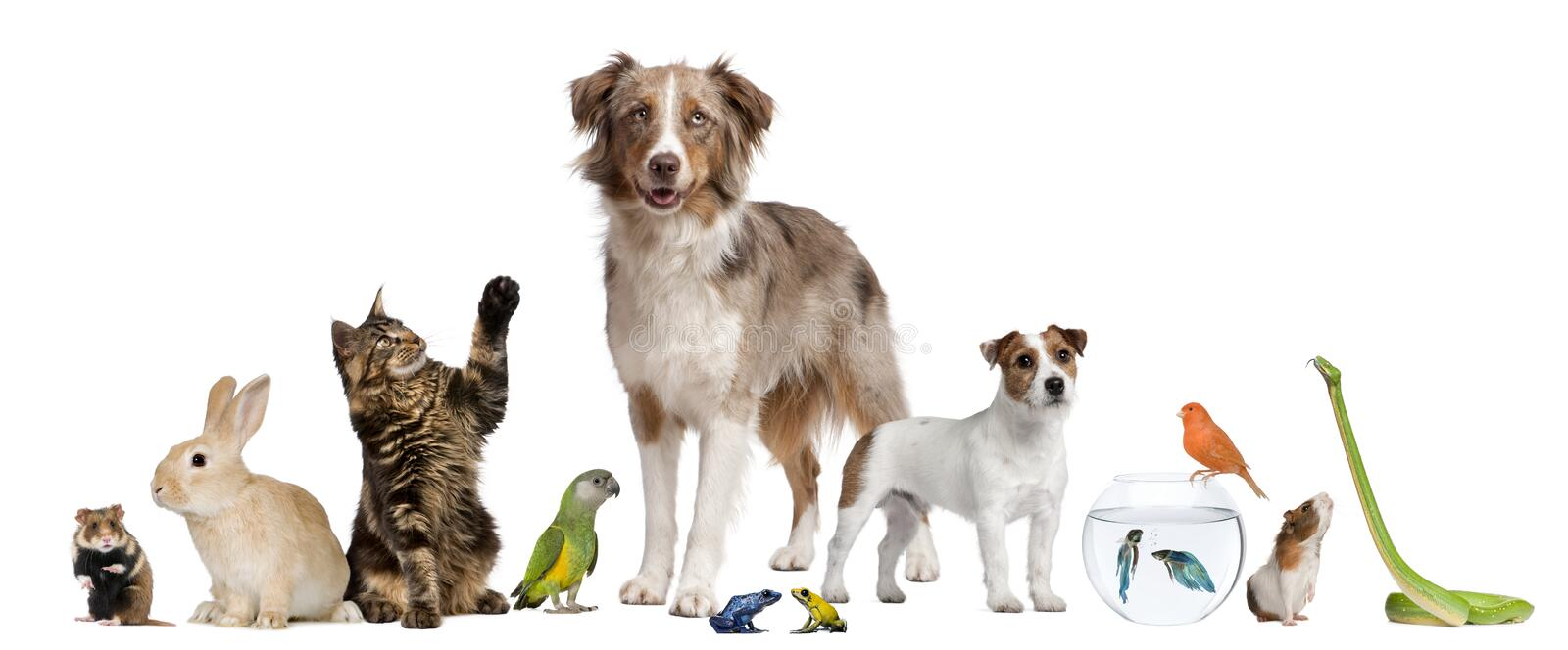 Group of pets together. In front of white background