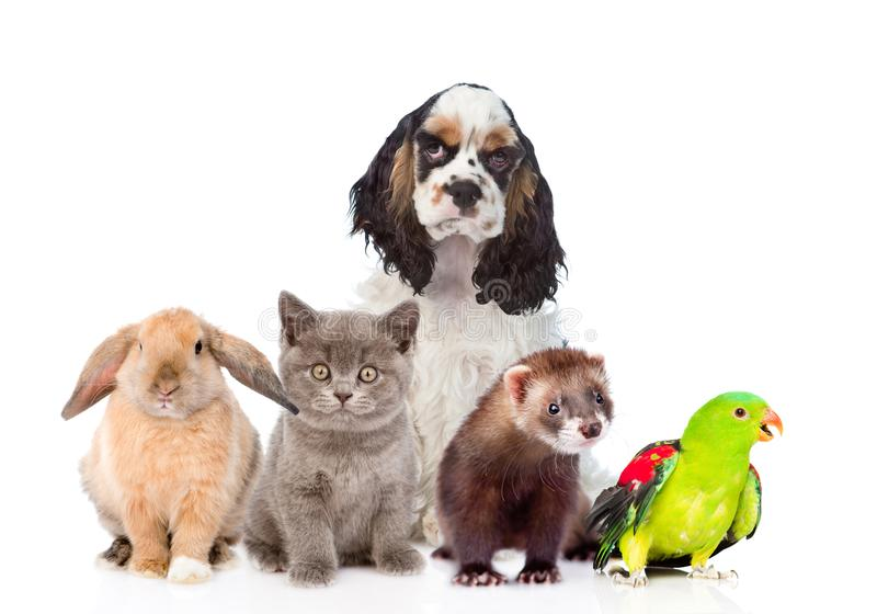 129 Pets Dog Cat Rabbit Bird Photos Free Royalty Free Stock Photos From Dreamstime