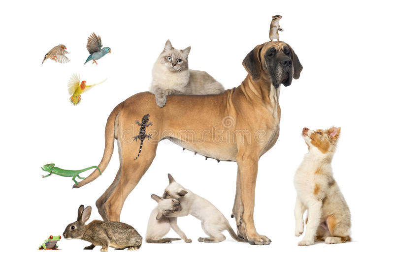 Group of pets together stock photography