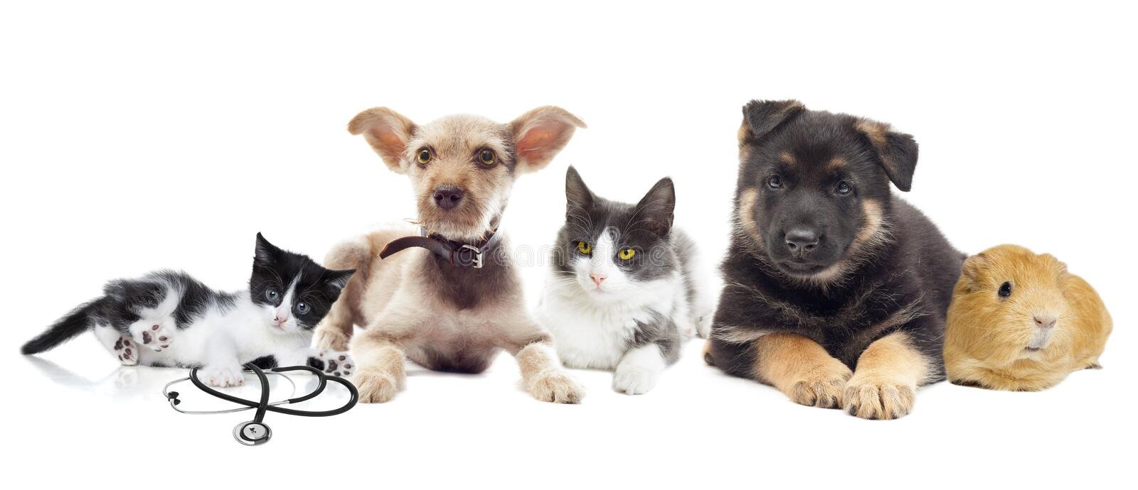 Group of pets. On a white background stock photo