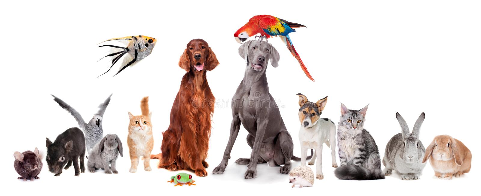 Group of pets on white royalty free stock images