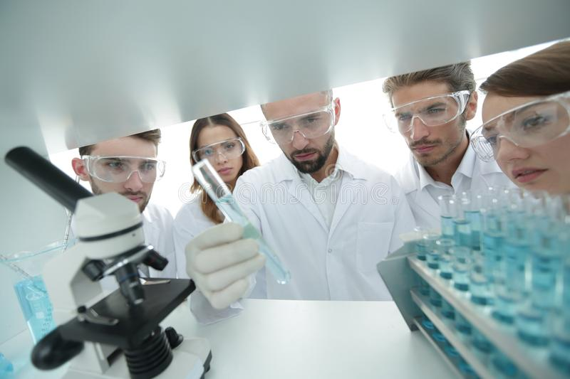 Group of pharmacists working in the laboratory. Photo with copy space royalty free stock photo