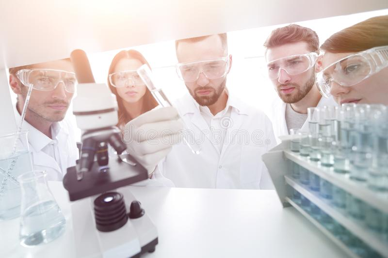 Group of pharmacists working in the laboratory. royalty free stock photography