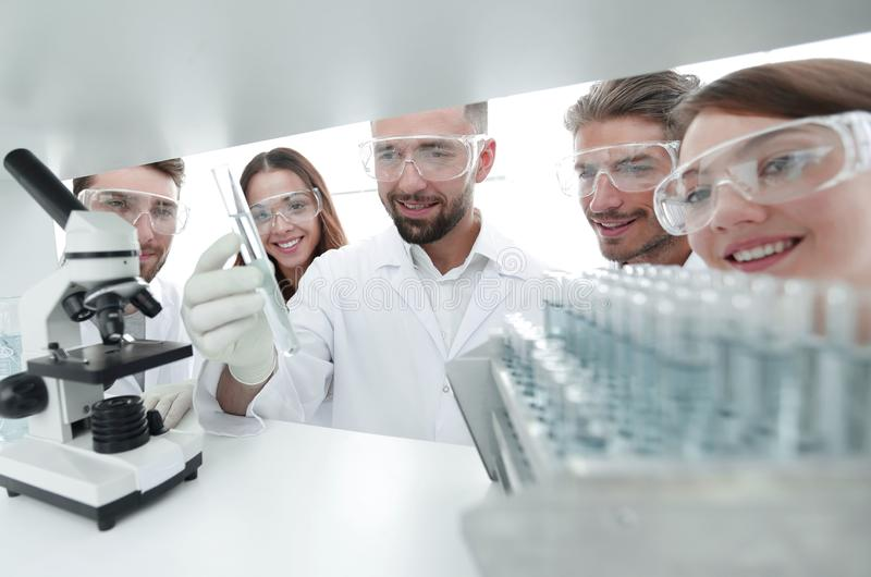 Group of pharmacists working in the laboratory. royalty free stock images