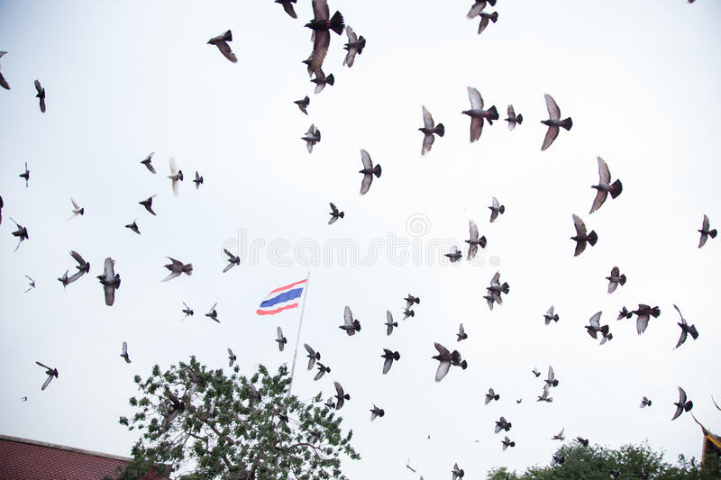 Group of pigeon royalty free stock photography