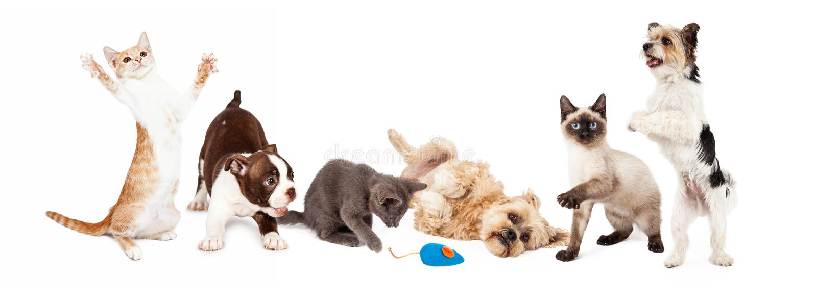 Group of Playful Cats and Dogs. A large group of young cats and dogs playing together. Image sized to fit a common social media banner royalty free stock image