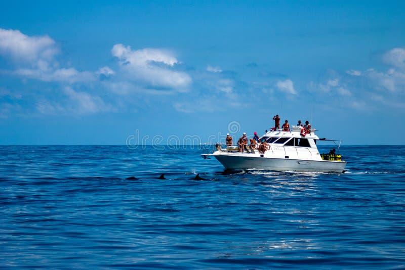 A group pod of wild dolphins close to a Recreational scuba diving boat. Santos, São Paulo, Brazil - February 27, 2006 - A group pod of wild dolphins close to stock photos