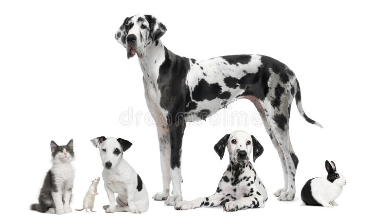 Group portrait of black and white animals royalty free stock photo