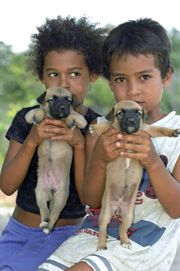 Group portrait Brazilian children with puppies. Brazil, Bahia, Entre Rios. In the rural village of Capim-Action, Conde municipality, posing a boy and girl royalty free stock photography