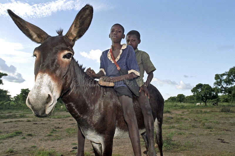Group portrait of young Ghanaian herdsmen stock photo