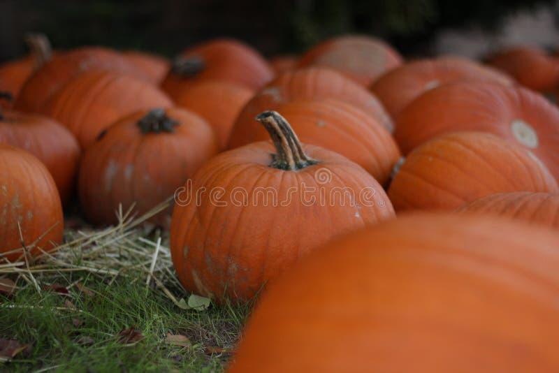 Fall Pumpkin Patch field centered Halloween stock photos