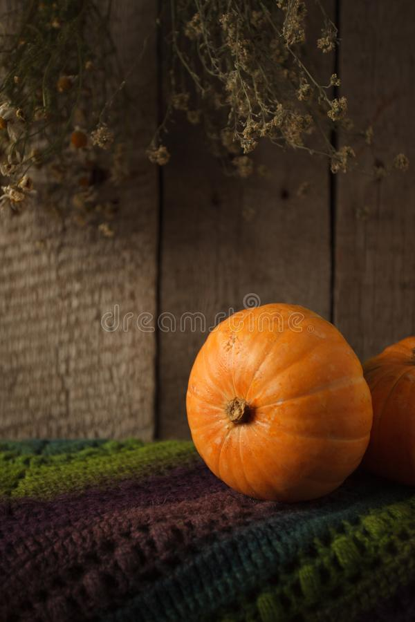 Group of pumpkins on a grunge wooden backdrop. Woolen scarf, Thanksgiving, coutryside And Fall Background, copy space. Group of pumpkins on a grunge wooden stock images