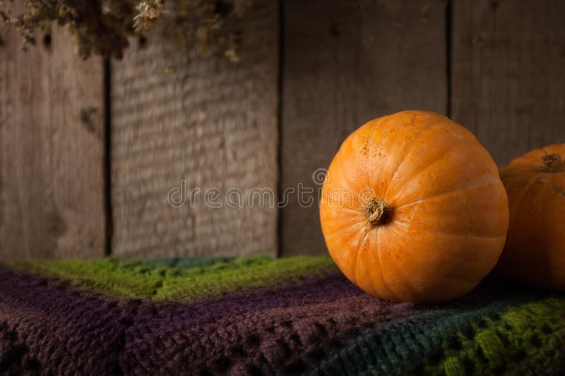 Group of pumpkins on a grunge wooden backdrop. Woolen scarf, Thanksgiving, coutryside And Fall Background, copy space. Group of pumpkins on a grunge wooden royalty free stock photos