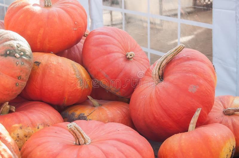 Group of pumpkins for halloween. Closeup of group of pumpkins for halloween stock images