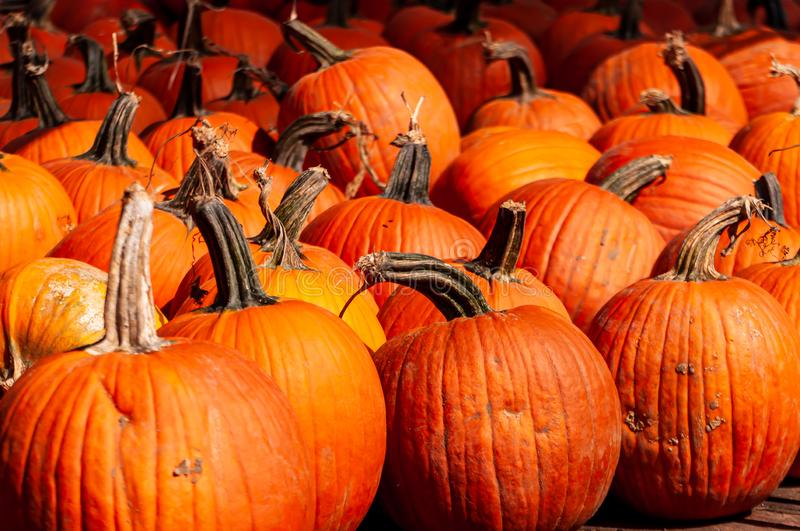 A group of pumpkins for sale stock photos