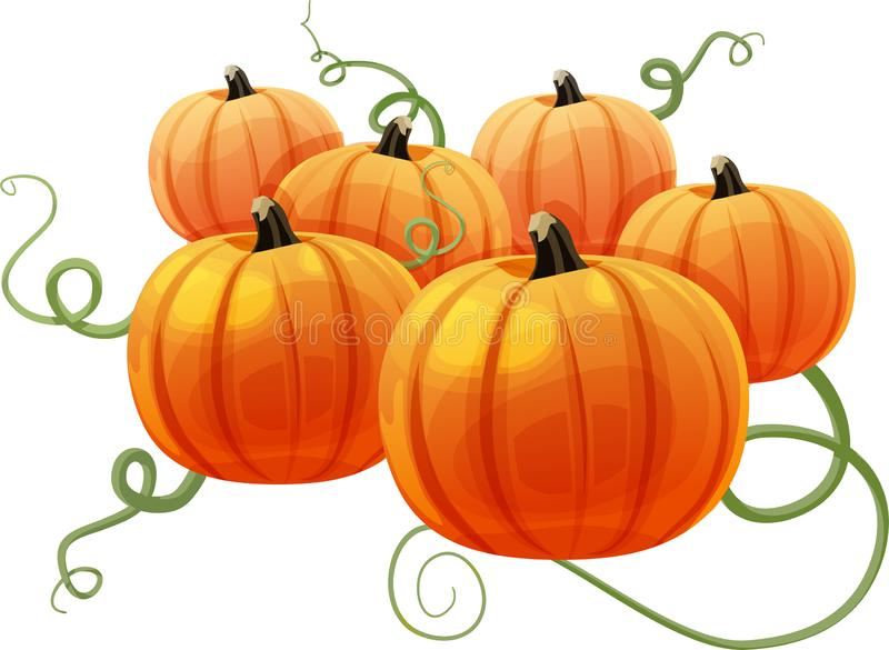 Group of Pumpkins with Vines. A pumpkin patch with six pumpkins and vines in background. Isolated vector illustration royalty free illustration