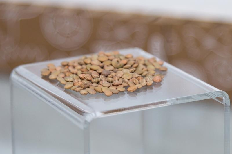 Group of Raw Brown Beans on a Transparent Pedestal royalty free stock photo