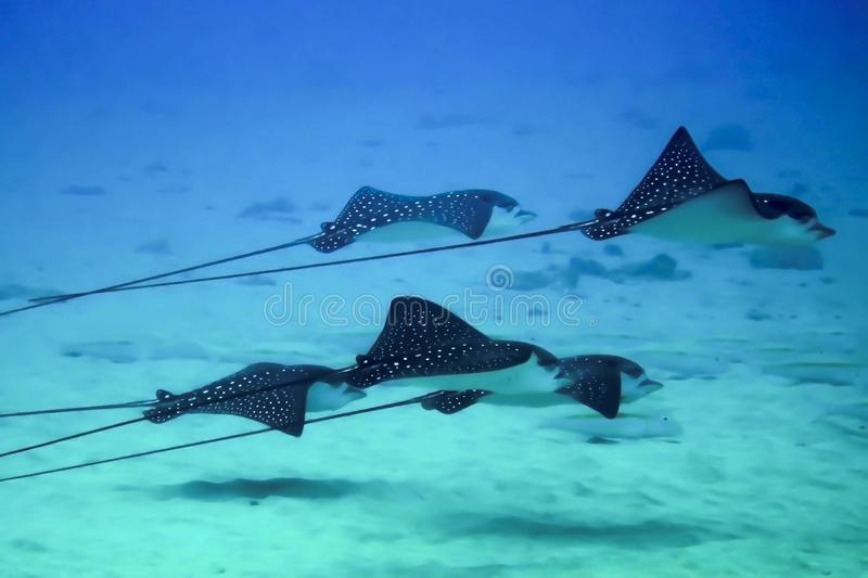 Group of Rays in Close Up Profile royalty free stock images