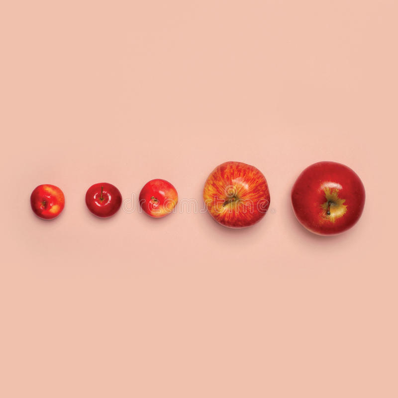 Group red apples fruits isolated on pink background, creative fashion minimalism stock photos