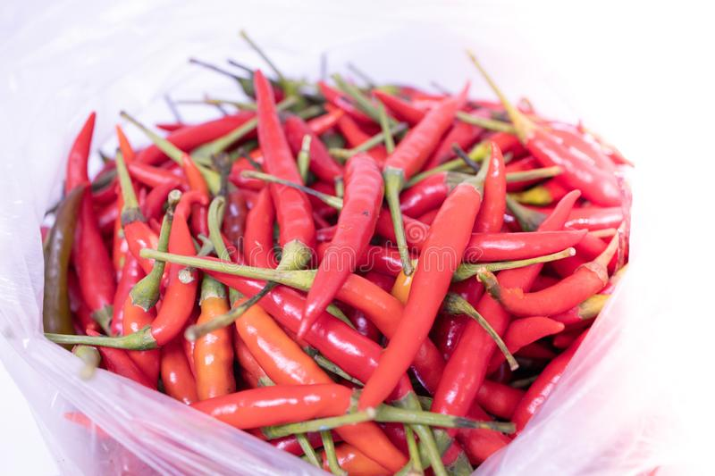 Group of Red chillis in a bag with white background. stock images
